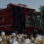 Baumwolle pflücken!