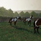 Bei den Apalosern das sind Pferde, die besondere Eigenschaften beim Rinderhüten aufweisen