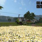 Kamille und Teefabrik