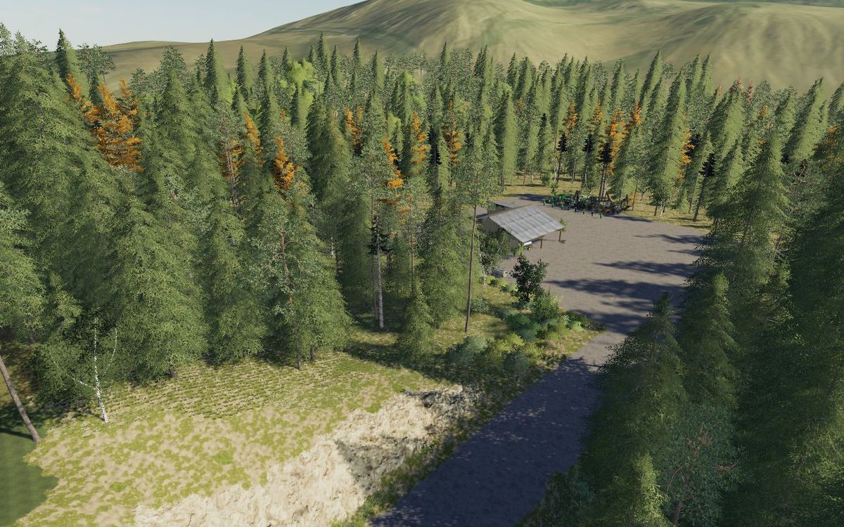 der Weg zur Forst