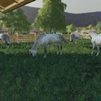 Sie gefallen einem nur Gut die Lippizaner eine sehr feinfühlige Pferderasse