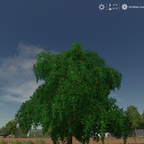 Apfelbaum Sommer