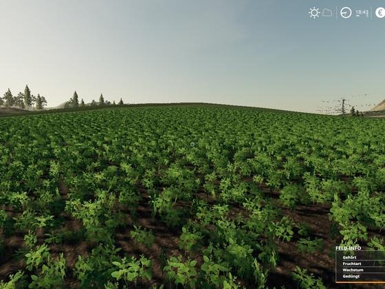 Sojabohnen und gleich ein ganzes Feld voll