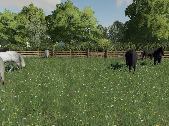 Diese Pferde werden in zwei Tagen gegen neue ausgetauscht