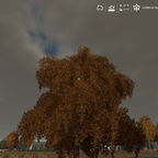 Apfelbaum Herbst