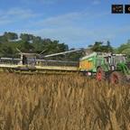 Getreideernte Loosberg 2